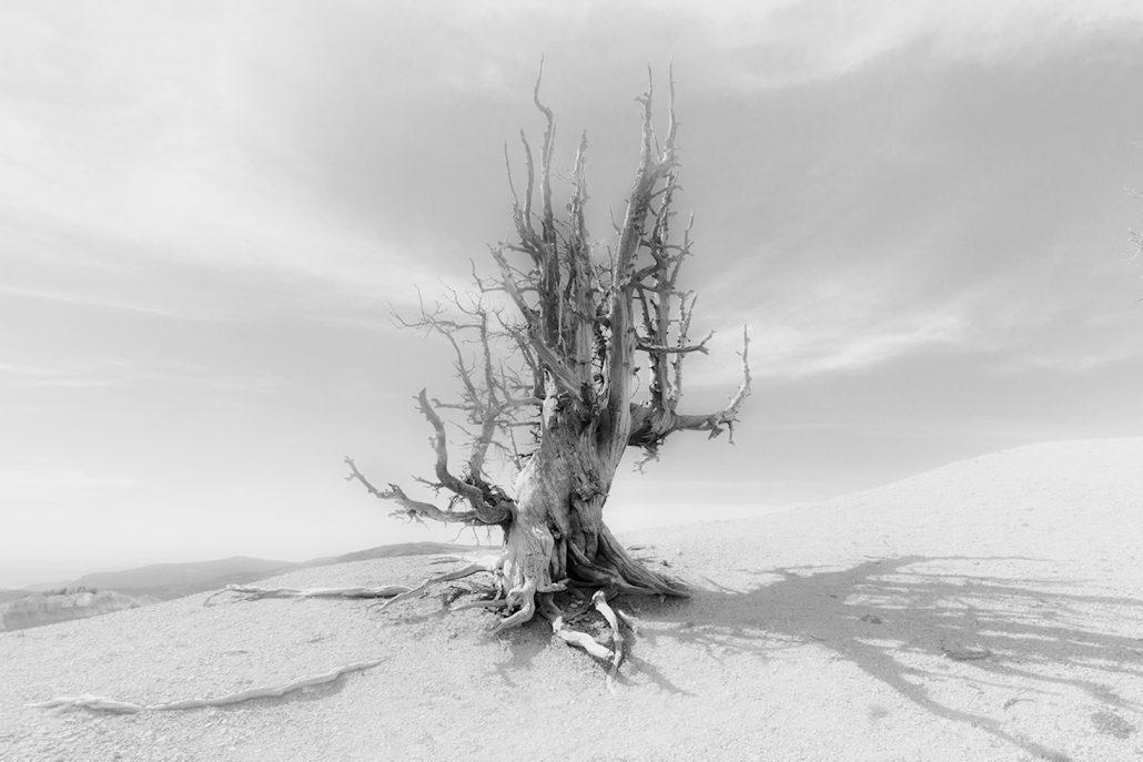 Peter Hilberts, Z/W foto  dode boom in woestijn landschap.