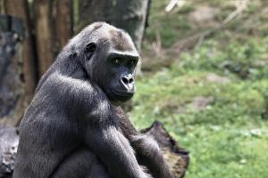 20170706 Krefeld Zoo (123)