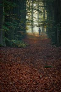 Twan van den Hombergh, Foto1 Bospad met wandelaar en mist