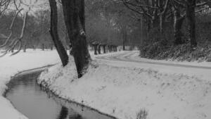 Sneeuw in Tegelen en Steijl