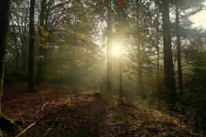 Bert Jacobs Foto 3 Zonsopkomst zon / nevel door bomen