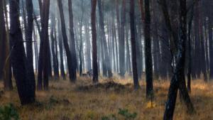 Peter Hilberts Foto 3 Herten Brachterwald
