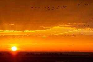 Peter Hilberts Foto 1, Kraanvogels bij zonsopgang
