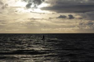 Manfred Schmitter , Foto 2 Windsurfer in zee